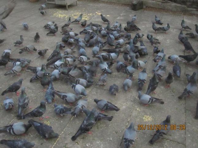 siddhibinayak mumbai 028